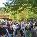 Photos: 東山動植物園(2019年10月) - 4:大勢の人で賑わう台風一過の秋の園内