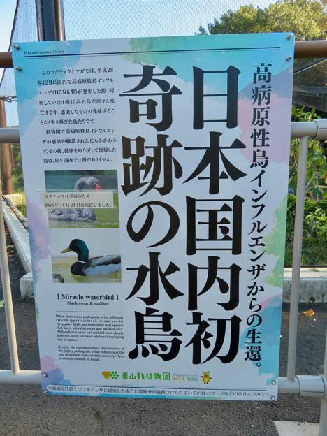東山動植物園(2019年10月) - 7:鳥インフルエンザ関連のポスター