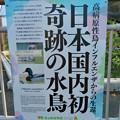 Photos: 東山動植物園(2019年10月) - 7:鳥インフルエンザ関連のポスター