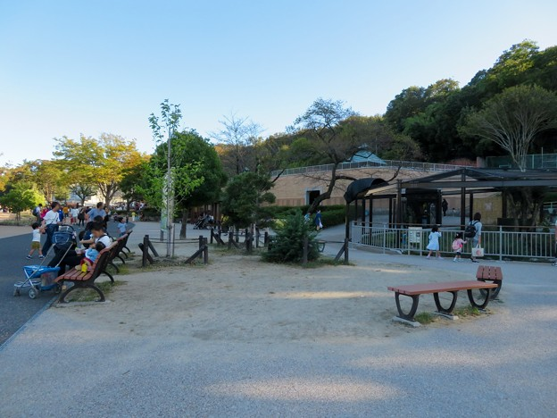 東山動植物園(2019年10月) - 8:すっきりしていたモモイロペリカン舎前