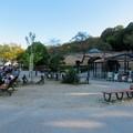 Photos: 東山動植物園(2019年10月) - 8:すっきりしていたモモイロペリカン舎前