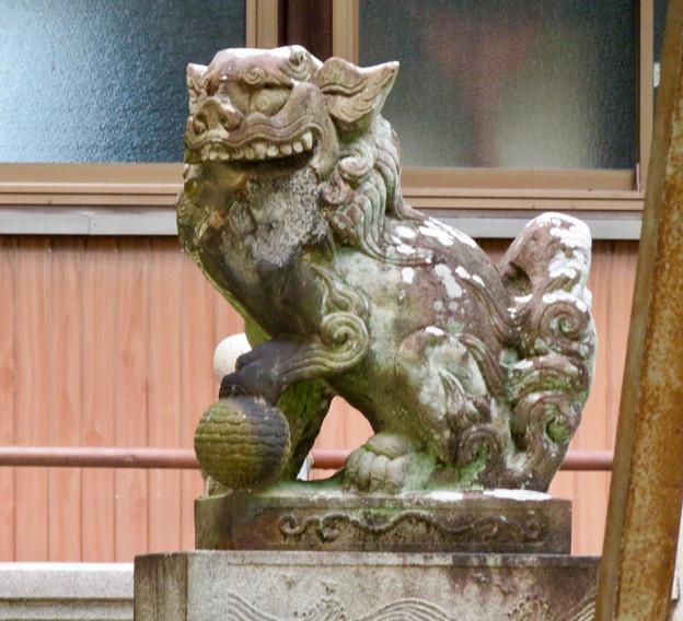 江南市草井町宮東の天神社 - 7:力強く口が空いてた狛犬