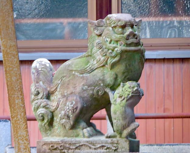 江南市草井町宮東の天神社 - 8:ユーモラスな顔をした狛犬