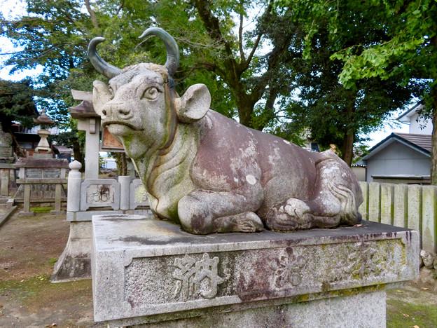 江南市草井町宮東の天神社 - 9:ローマ彫刻の様な牛の像