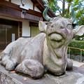 江南市草井町宮東の天神社 - 11:ローマ彫刻の様な牛の像