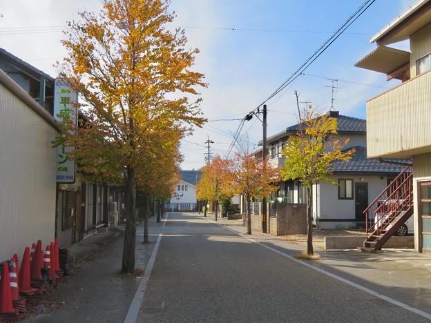 新加納一里塚跡近くの道の紅葉並木