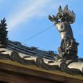 Photos: 中山道 間の宿 新加納 No - 29:少林寺の本堂横にあるお堂の屋根のユーモラスな狛犬