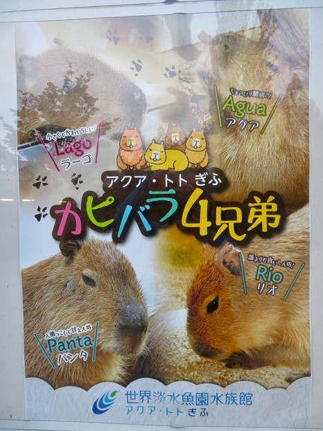 アクア・トトぎふ:カピバラ4兄弟のポスター