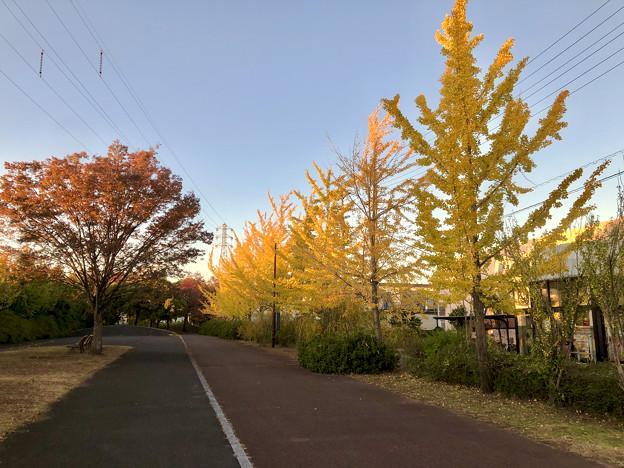尾張広域緑道の紅葉した木々 - 1