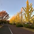Photos: 尾張広域緑道の紅葉した木々 - 1