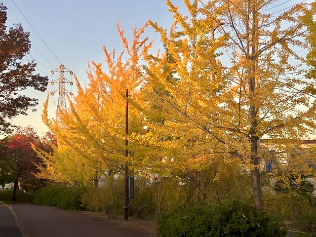 尾張広域緑道の紅葉した木々 - 2