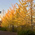 Photos: 尾張広域緑道の紅葉した木々 - 2