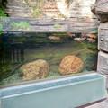 Photos: アクア・トトぎふ No - 20:ヤマトイワナの水槽