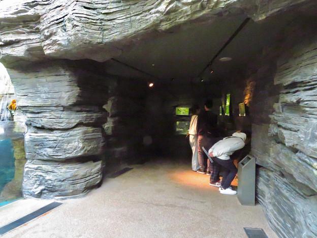 アクア・トトぎふ No - 38:4階岩場をモチーフにした展示スペース