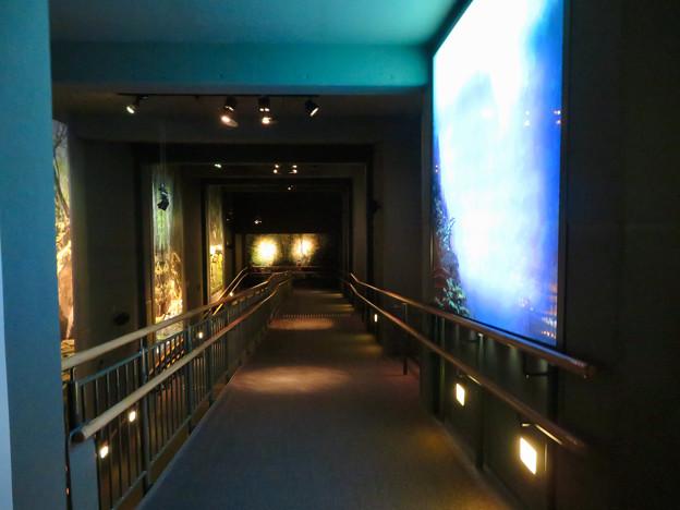 アクア・トトぎふ No - 40:4階から3階へと続くスロープ