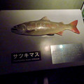 Photos: アクア・トトぎふ No - 47:サツキマスの模型