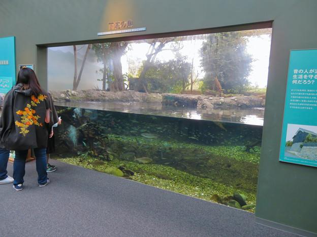 アクア・トトぎふ No - 101:長良川下流の魚を展示した水槽