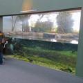 Photos: アクア・トトぎふ No - 101:長良川下流の魚を展示した水槽