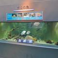 Photos: アクア・トトぎふ No - 110:長良川河口の魚が展示された水槽