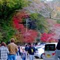 岩谷堂公園の紅葉(2019年11月17日)- 1