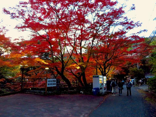 岩谷堂公園 紅葉ライトアップ(2019年11月17日)- 11
