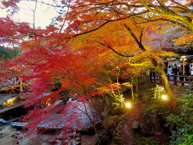 岩谷堂公園 紅葉ライトアップ(2019年11月17日)- 12