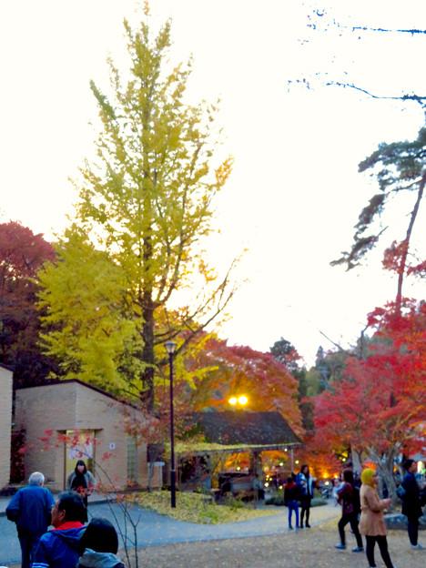 岩谷堂公園 紅葉ライトアップ(2019年11月17日)- 15