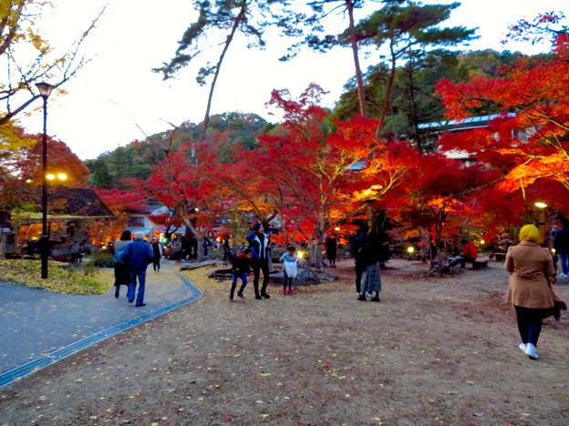 岩谷堂公園 紅葉ライトアップ(2019年11月17日)- 16
