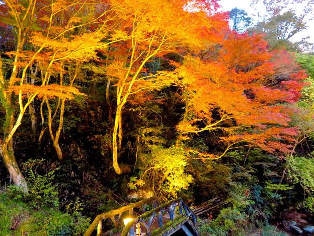 岩谷堂公園 紅葉ライトアップ(2019年11月17日)- 18