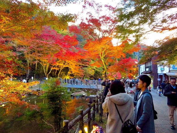 岩谷堂公園 紅葉ライトアップ(2019年11月17日)- 19