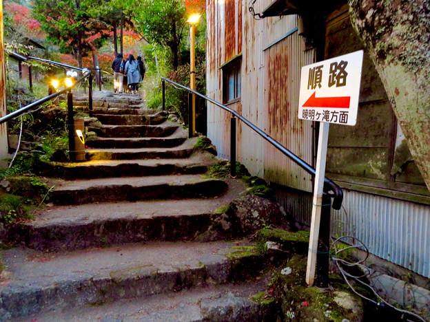 岩谷堂公園 紅葉ライトアップ(2019年11月17日)- 21