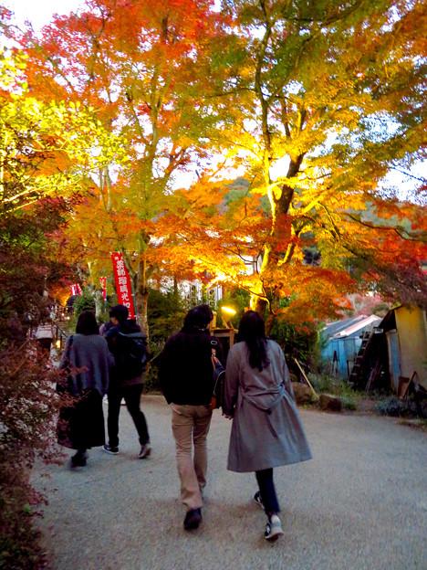 岩谷堂公園 紅葉ライトアップ(2019年11月17日)- 22