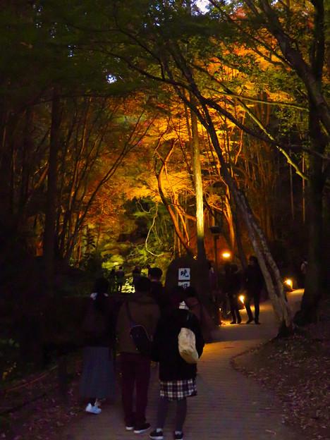 岩谷堂公園 紅葉ライトアップ(2019年11月17日)- 24