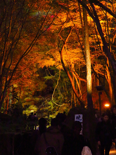 岩谷堂公園 紅葉ライトアップ(2019年11月17日)- 25