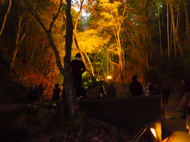 岩谷堂公園 紅葉ライトアップ(2019年11月17日)- 27