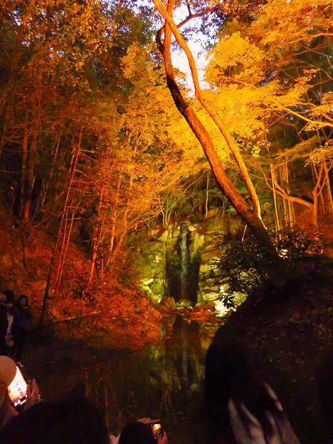 岩谷堂公園 紅葉ライトアップ(2019年11月17日)- 28