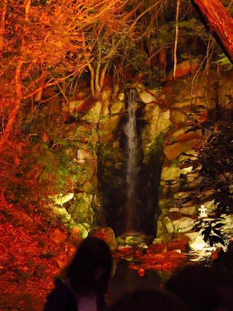 岩谷堂公園 紅葉ライトアップ(2019年11月17日)- 29