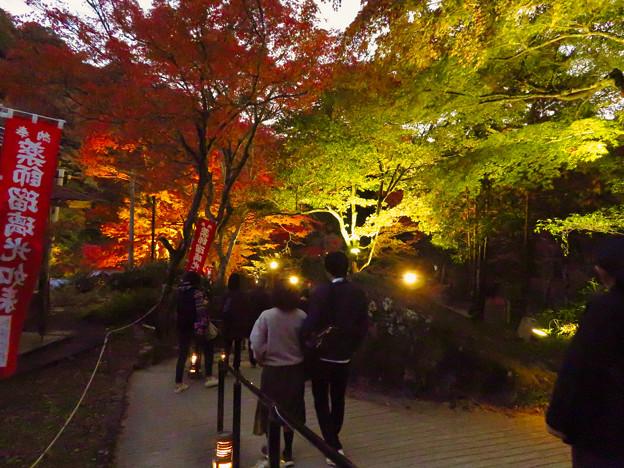 岩谷堂公園 紅葉ライトアップ(2019年11月17日)- 42