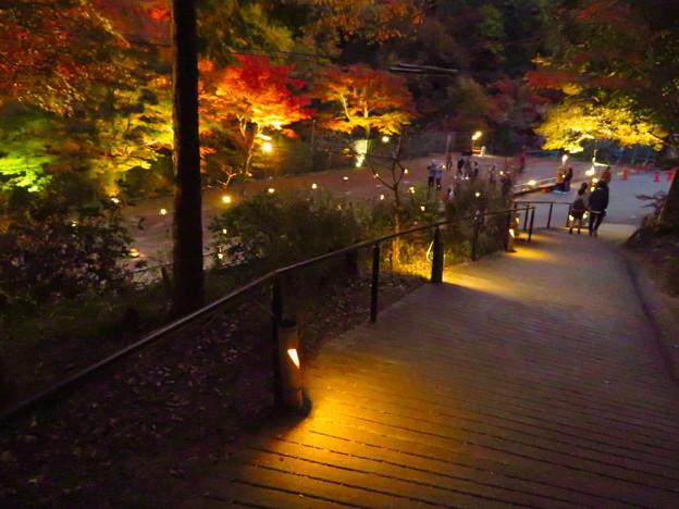 岩谷堂公園 紅葉ライトアップ(2019年11月17日)- 45