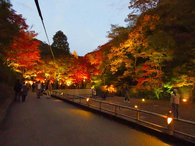 岩谷堂公園 紅葉ライトアップ(2019年11月17日)- 46