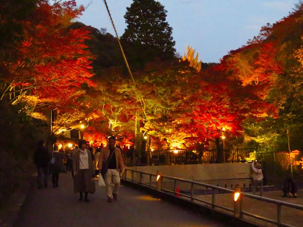 岩谷堂公園 紅葉ライトアップ(2019年11月17日)- 47
