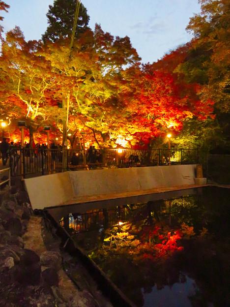 岩谷堂公園 紅葉ライトアップ(2019年11月17日)- 48