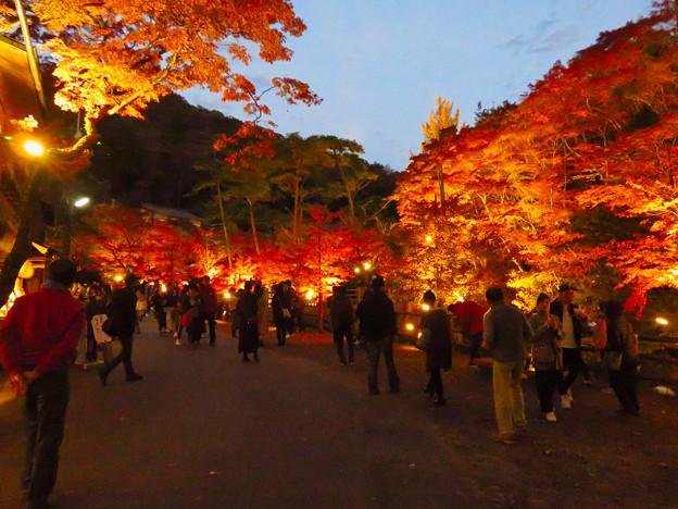 岩谷堂公園 紅葉ライトアップ(2019年11月17日)- 50