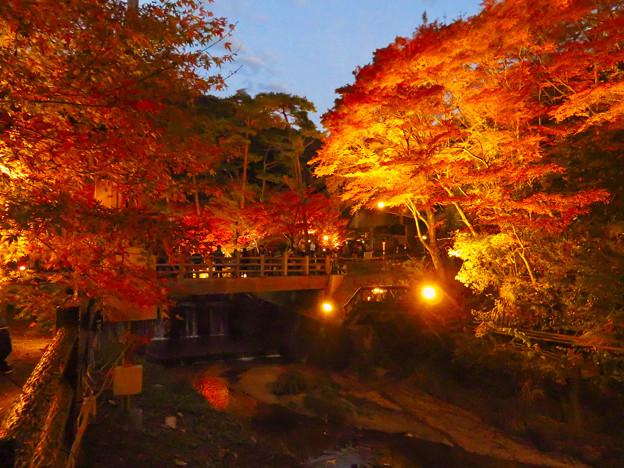岩谷堂公園 紅葉ライトアップ(2019年11月17日)- 52