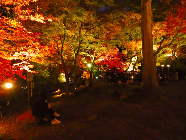岩谷堂公園 紅葉ライトアップ(2019年11月17日)- 53