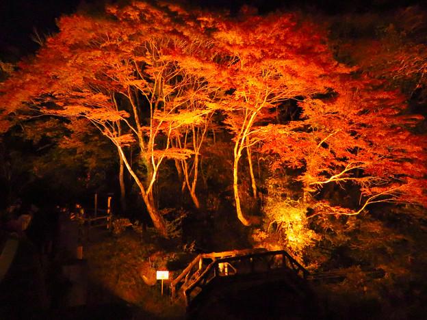 岩谷堂公園 紅葉ライトアップ(2019年11月17日)- 55