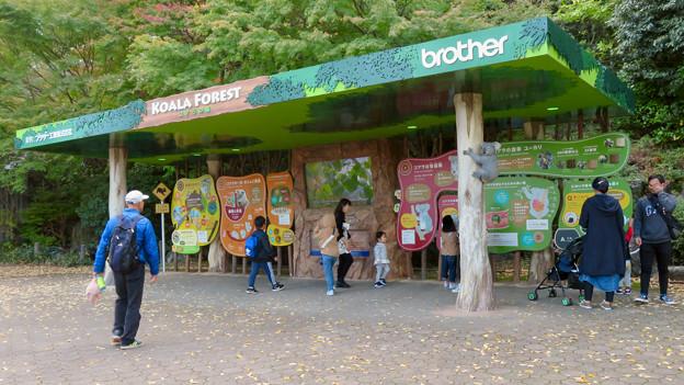 東山動植物園のコアラ舎 - 2:入り口前のコアラの説明