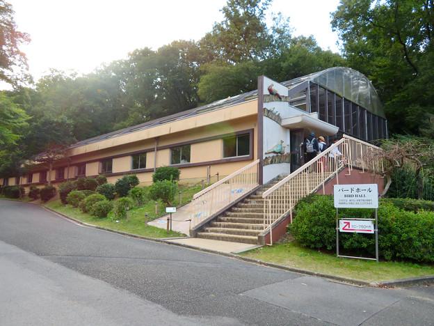 東山動植物園バードホール - 1