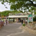 東山動植物園 上池のボートハウス - 1