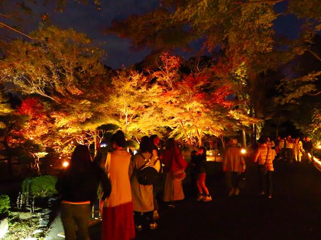 東山動植物園 紅葉ライトアップ(2019年11月17日)- 17